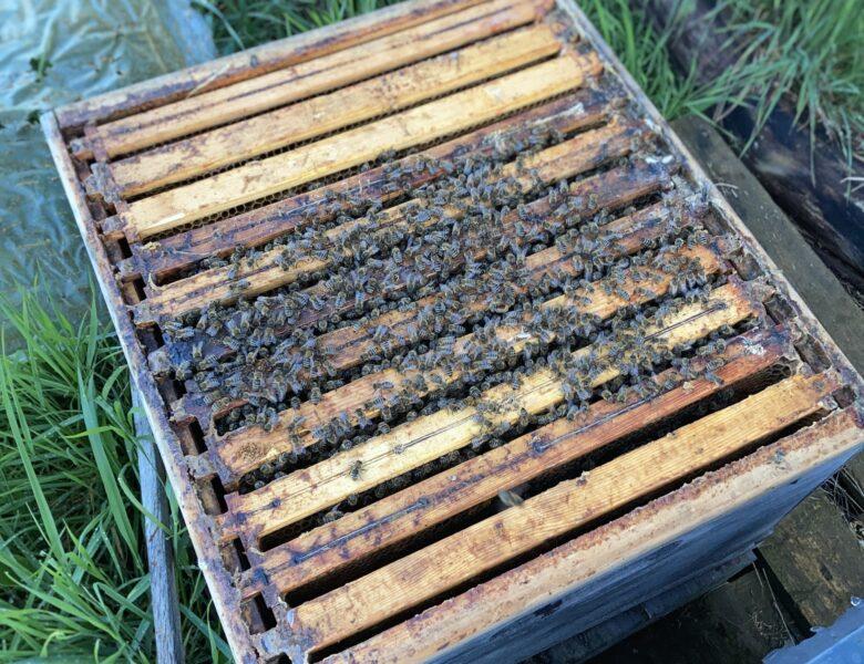 Bienenstock voll gut überwintert
