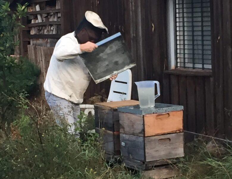 Bienen-Fütterung 2020 Spätherbst